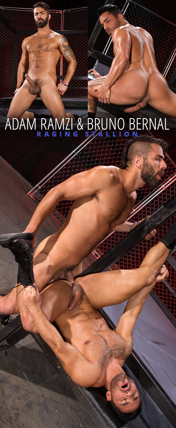 "Raging Stallion: Adam Ramzi pounds Bruno Bernal in ""Primal"""